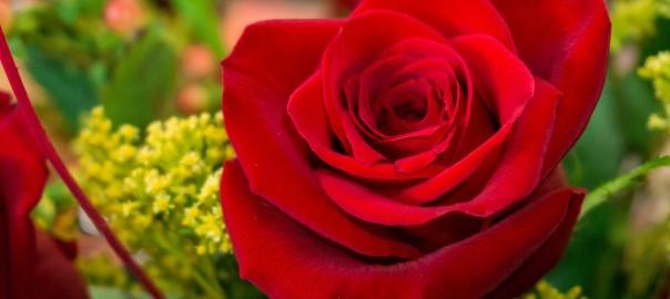 flore-3611638_1920